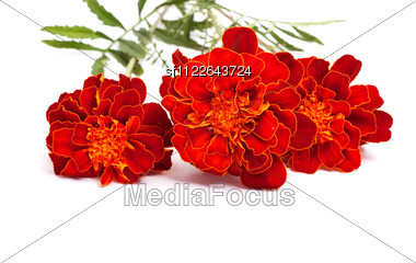 Flowers With Leaves Stock Photo