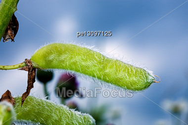 Fluffy Plant On A Background Of The Sky Stock Photo