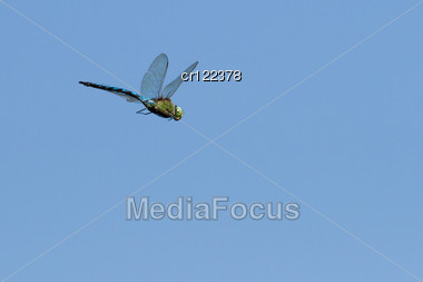 Flying Dragonfly On Blue Sky Stock Photo