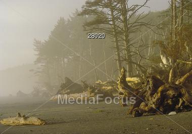 Foggy Beach with Dead Trees Stock Photo