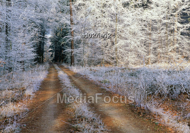 Forested Forest Stock Photo