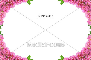 Frame Made Flowers Of Clover And Green Leaves Stock Photo