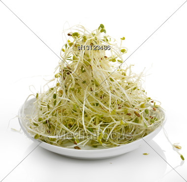 Fresh Alfalfa Sprouts In A White Plate Stock Photo