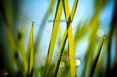 Fresh Grass Against Blue Sky Stock Photo