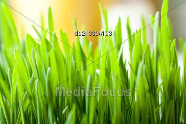 Fresh Grass Indoor As Background With Copyspace Stock Photo