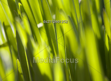 Fresh Green Grass (shallow DoF) Stock Photo