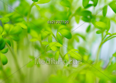 Fresh Green Grass (shallow DoF Stock Photo