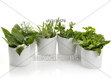 Fresh Herbs Assortment In White Cups Stock Photo