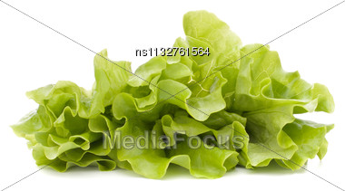 Fresh Lettuce Salad Leaves Bunch Isolated On White Background Cutout Stock Photo