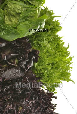 Fresh Salad Leaves Assortment Close Up Stock Photo