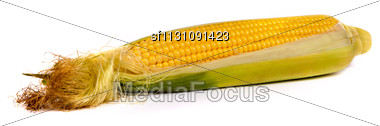 Fresh Uncooked Corn On The Cob, With Husk Removed, Isolated On White Stock Photo