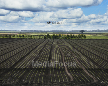Freshly Sown Florida Fields Against A Sky Stock Photo
