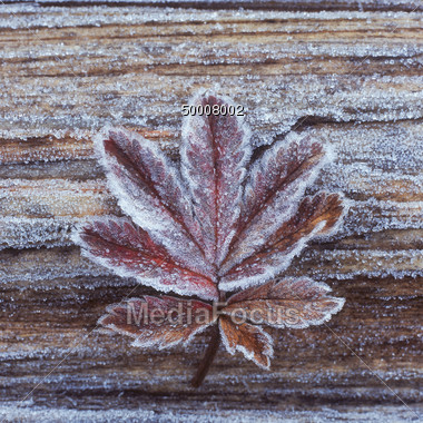 Frosted Leaf on Wood Background Stock Photo