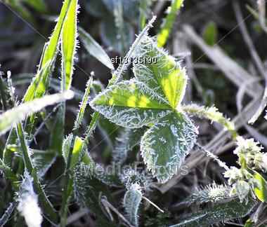 Frozen Green Grass, Close Up Shot Stock Photo
