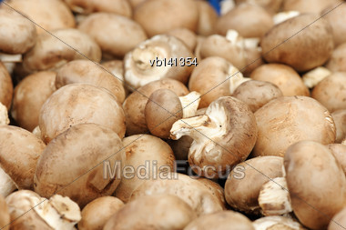 Fruiting Bodies Of Champignon, Edible Gilled Fungus Stock Photo