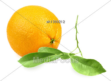 Full Orange-fruit And Branch With Green Leaf. Placed On White Background. Close-up. Studio Photography Stock Photo