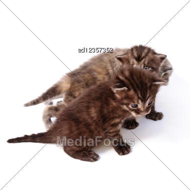 Funny Playful Little Kittens Stock Photo