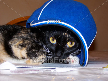 Funny Shot Of A Cat Wearing Baseball Cap Stock Photo