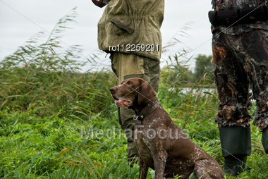 German Pointer And Closeup Of Two Man At Hunting Stock Photo