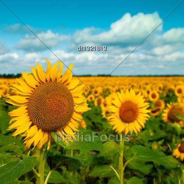 Golden Flowers, Optimistic Summer Landscape For Your Design Stock Photo