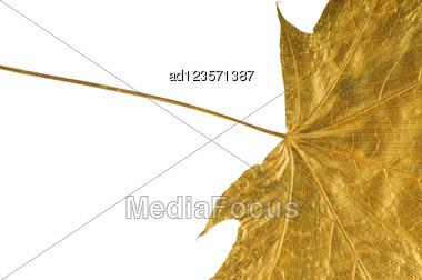 Golden Maple Tree Leaf Isolated On White Stock Photo