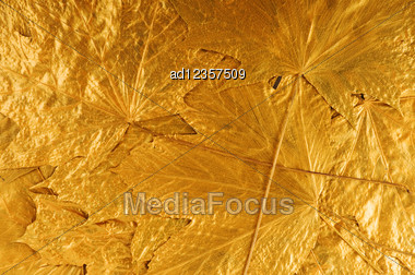 Golden Maple Tree Leaves Background Stock Photo