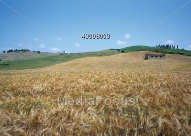 Grain Fields, Tuscany, Italy Stock Photo