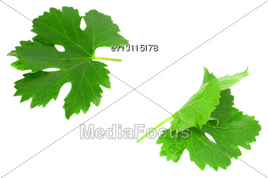 Grapes Green Leaf . Isoalted Over White Stock Photo