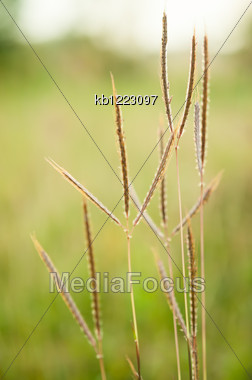 Grass In Field With Green Background Stock Photo