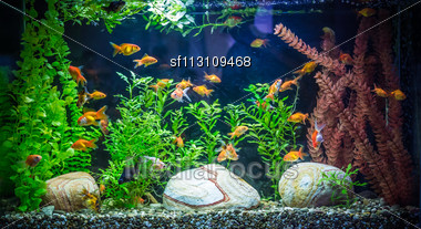 Green Beautiful Planted Tropical Freshwater Aquarium With Fishes Stock Photo