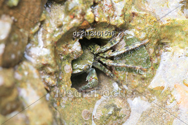 Green Crab In The Hole Of Rock In The Sea Stock Photo