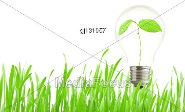 Green Eco Energy Concept, Plant Growing Inside The Light Bulb Stock Photo