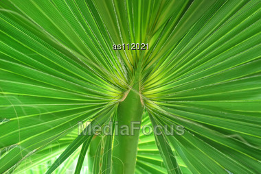 Green Exotic Tropical Leaf Close-up Texture (Background) Stock Photo