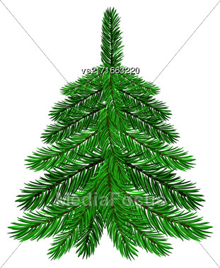 Green Fir Isolated On White Background. Symbol Of Christmas Stock Photo