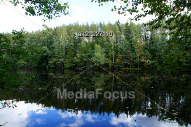 Green Forest And Its Reflection In Water Stock Photo