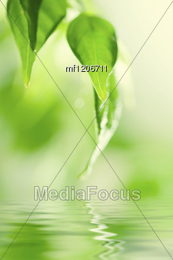 Green Fresh Leaves Over Water Stock Photo