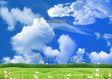 Green Glade And Flowers In Summer Day Stock Photo