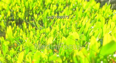Green Grass At Sun Light Stock Photo