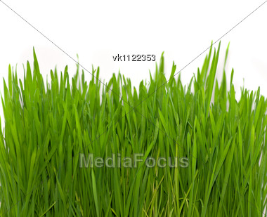 green grass on white (wheat) Stock Photo