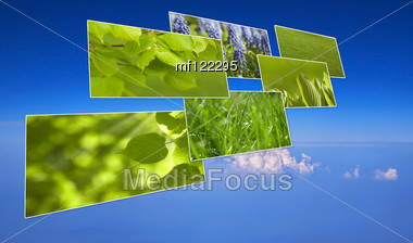 Green Grass And Plant . Image Collection On Blue Sky Background Stock Photo