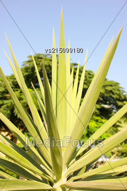 Green Leaf At Sun Light. Close Up. Lines And Textures Of Green Palm Leaves Stock Photo