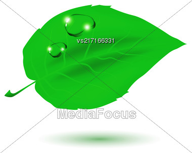 Green Leaf And Water Drop Isolated On White Background Stock Photo