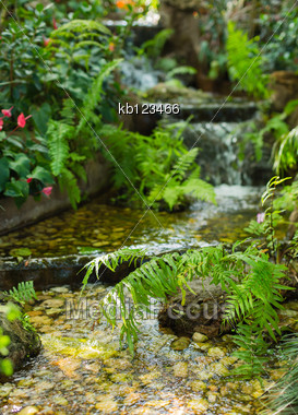 Green Leaf With Water Fall In Nature Stock Photo
