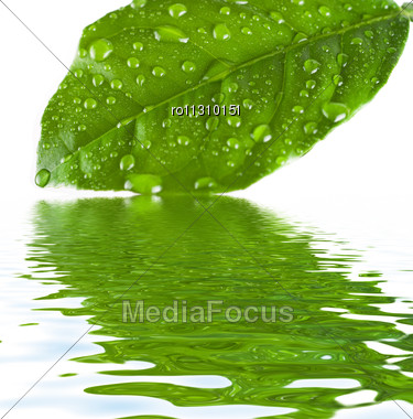 Green Leave At The Water With Reflection Stock Photo