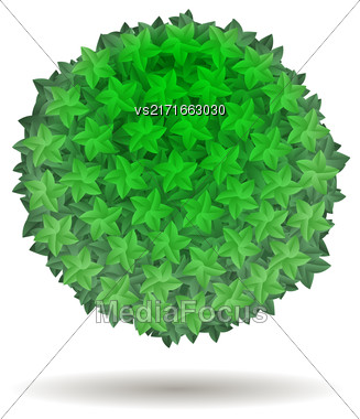 Green Leaves Circle Isolated On White Background Stock Photo