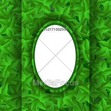 Green Leaves Pattern. Evergreen Hedgegrow. Summer Leaves Background Stock Photo