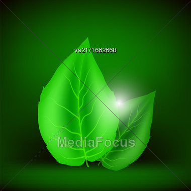 Green Leaves Isolated On Soft Green Background. Eco Icon With Green Leaves Stock Photo