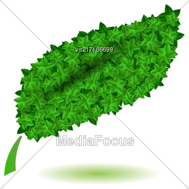 Green Leaves Isolated On White Background. Symbl Of Nature Stock Photo