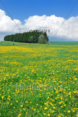 Green Meadow In May, Covered With Yellow Flowers Of Dandelions, And Blue Sky With Clouds Stock Photo