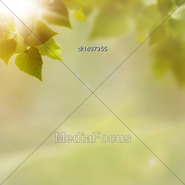 Green Nature, Abstract Environmental Backgrounds For Your Design Stock Photo